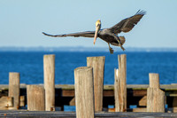 Fort Morgan Wildlife Photographer