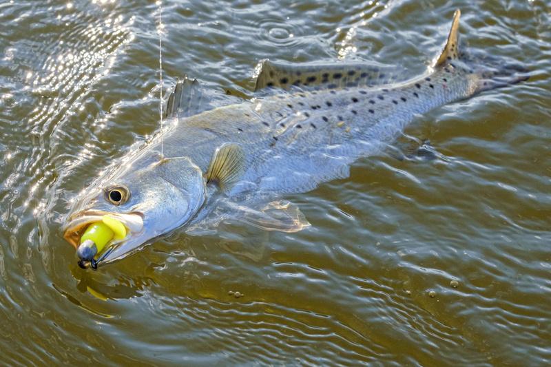Fairhope Fishing