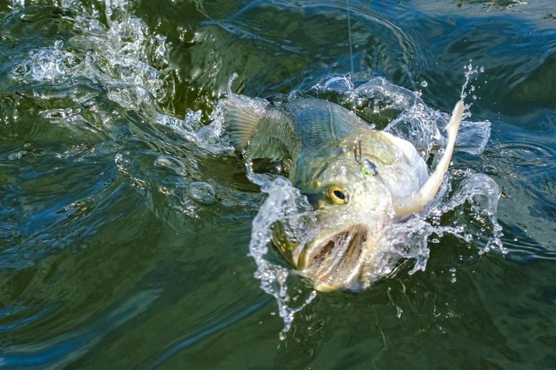 Pensacola Inshore Fishing Photography