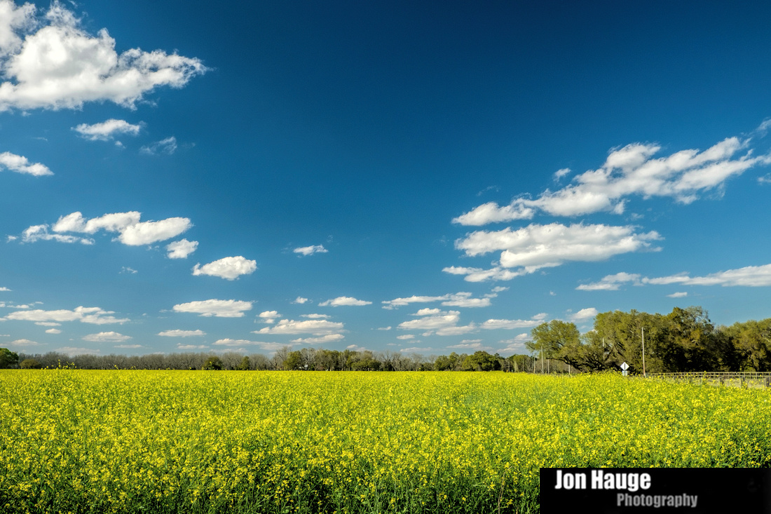 Foley Landscape