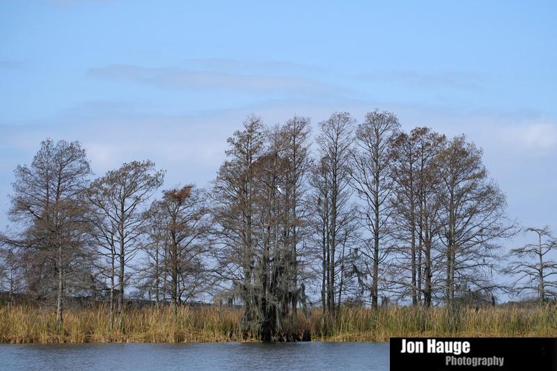 Great Egret in Blakeley River