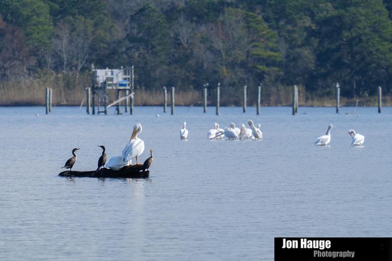 Mobile Bay Wildlife