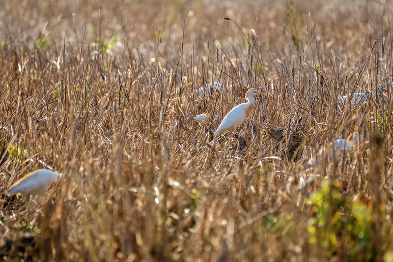 Wildlife Photographer in Baldwin County