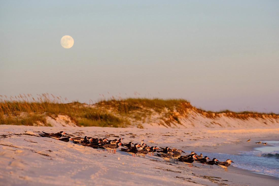 Pensacola Beach Moonrise
