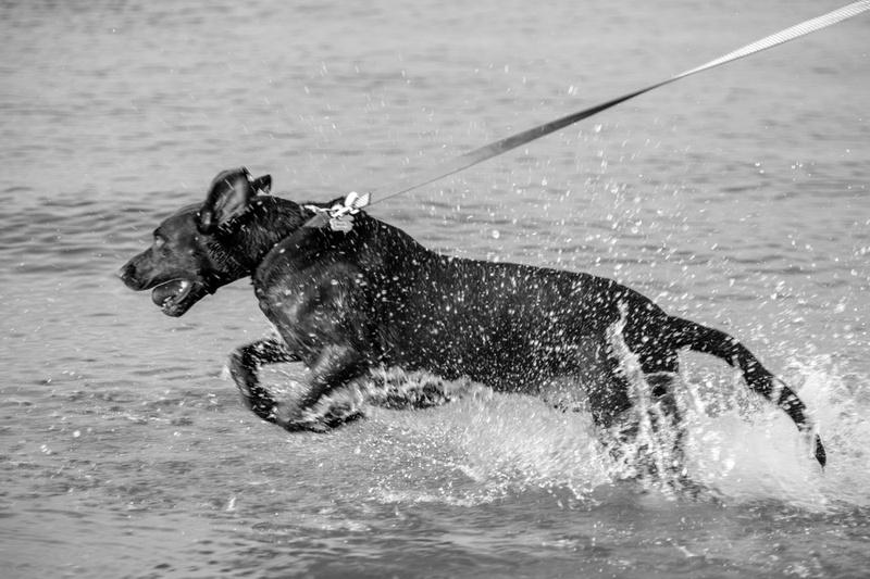 Pet Photographer in Orange Beach Alabama