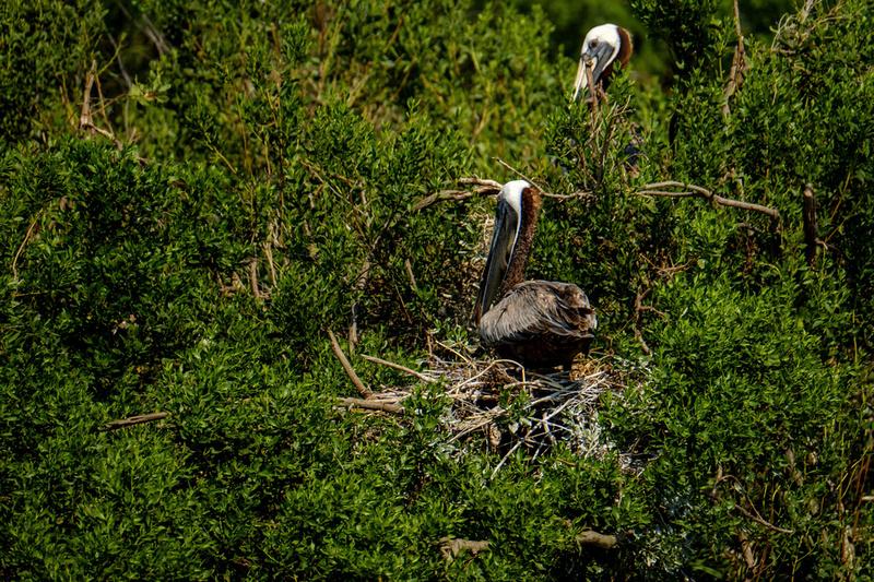 Gaillard Island Photography