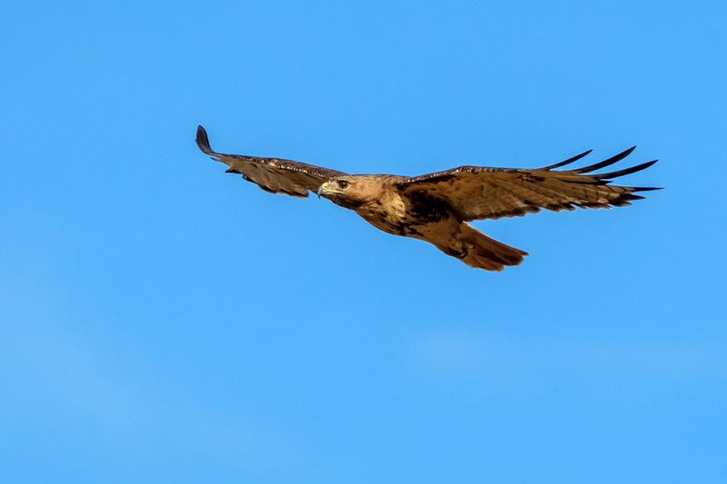 Gulf Shores Wildlife Photographer
