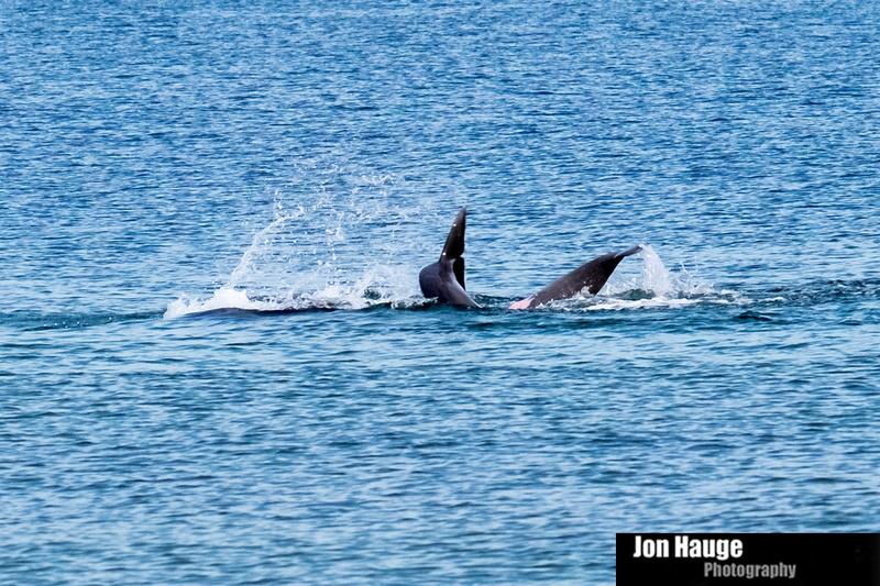 Dolphins in Perdido Key