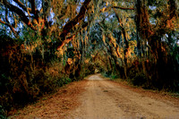 Spanish Moss Trail
