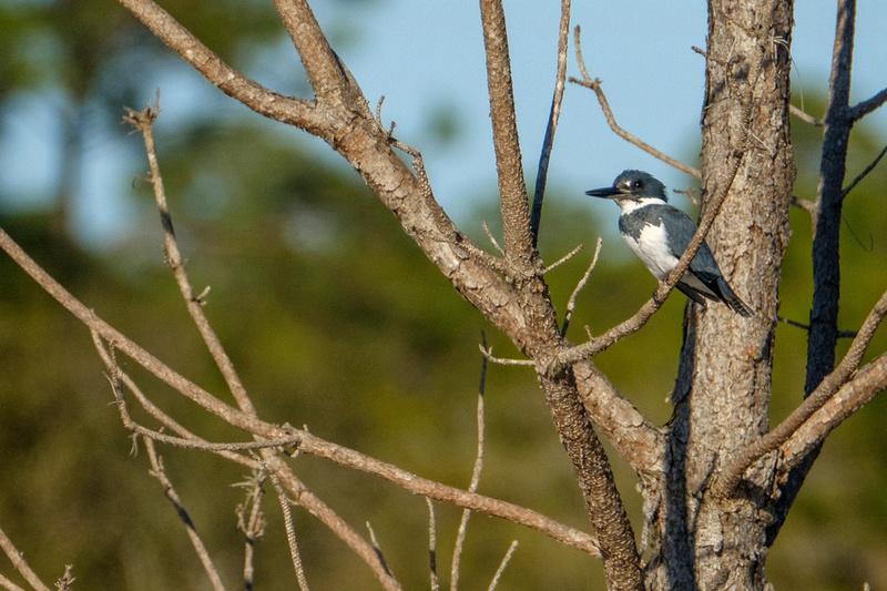 Gulf Shores Wildlife