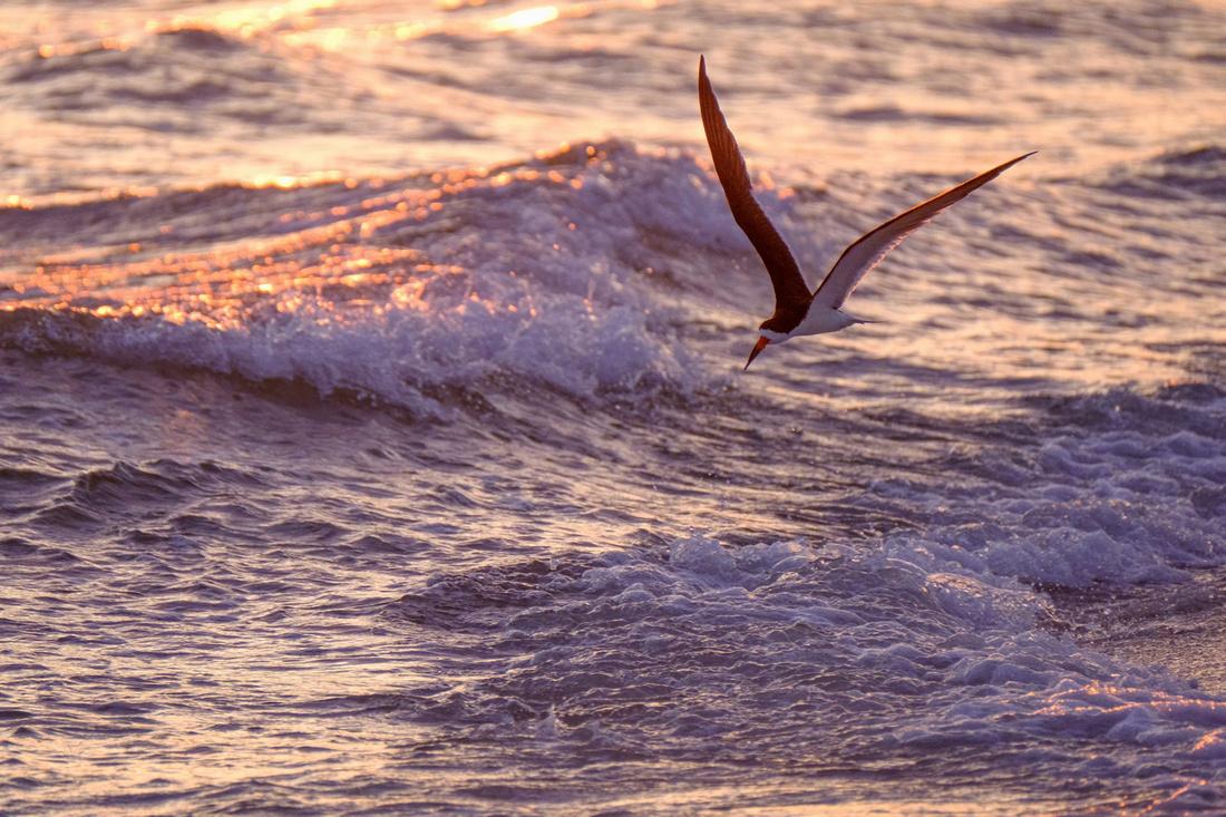 Gulf Coast Wildlife Photographer
