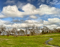 Baldwin County Landscapes