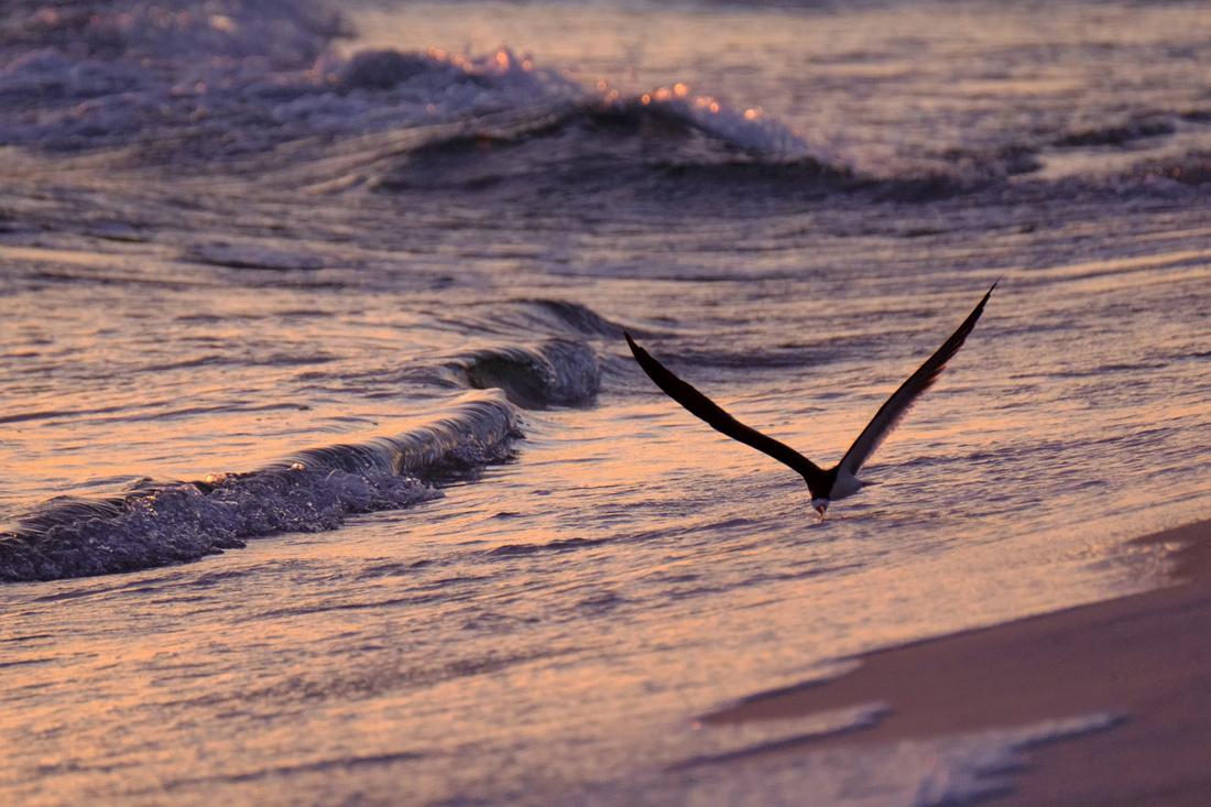 Wildlife at Pensacola Beach